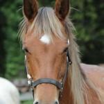 randonnees a cheval ariege